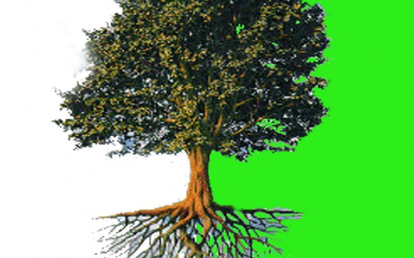 تسلیم و رضا؛ ریشه درخت دین
